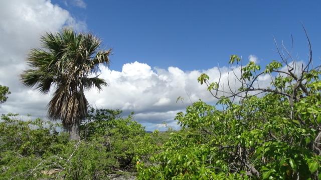 Onderzoek naar vegetatieontwikkeling op de Nederlandse Caribische eilanden