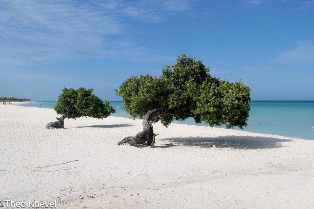 Aruba versoepelt de maatregelen rondom het coronavirus
