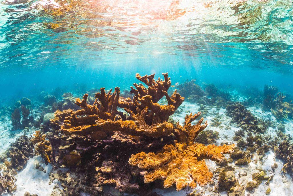 Rutte op de bres voor Caribisch koraal