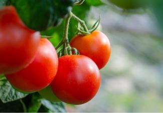 Bonairiaans eilandbestuur start project voor ondernemers in agrarische sector