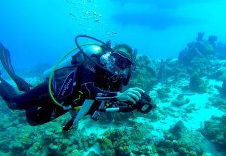 Koraalrif Bonaire lijkt te herstellen van verbleking