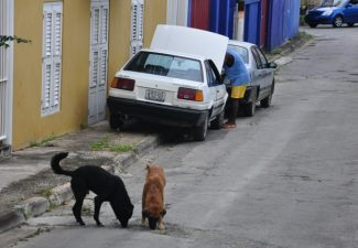Wet op Dierenwelzijn op Curaçao aangenomen