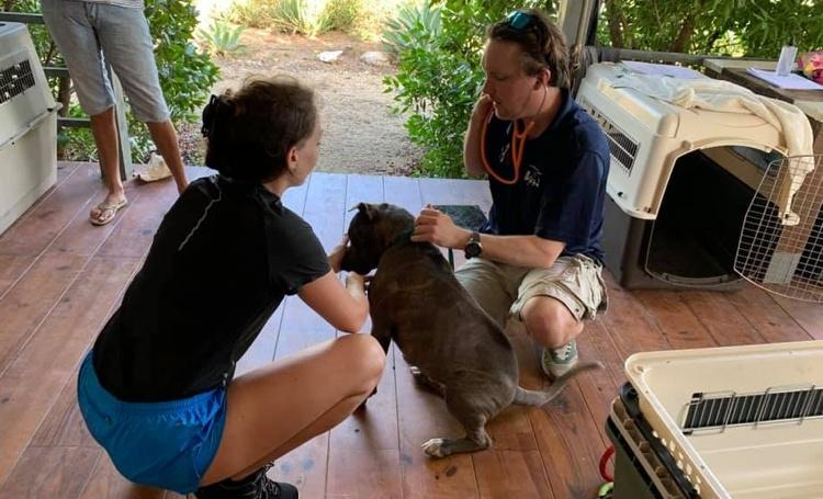 Gratis castratie en sterilisatie van hond of kat op Bonaire