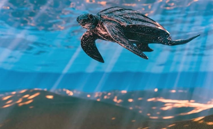 Vakantie op Aruba tussen de schildpadbaby's