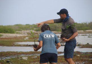 Vrijwilligers zetten honderden mangroveplantjes uit op Bonaire